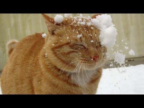 雪で遊ぶ姿がとってもCute♡にゃんこ大集合!!