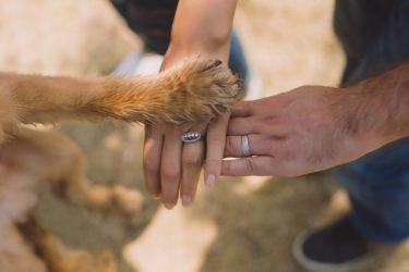 (サンプル)保護犬のケア、散歩のお願いができるボランティアを募集します3