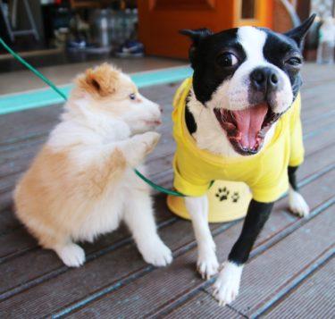 (サンプル)Fun Fun Pets CAFE3