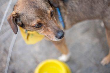 (サンプル)保護犬のケア、散歩のお願いができるボランティアを募集します